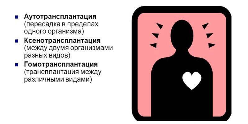 Ксенотрансплантация