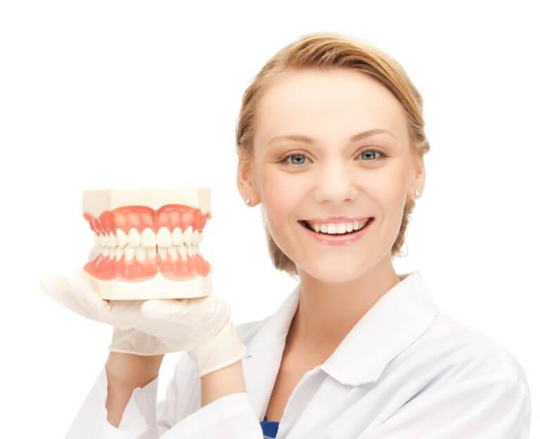 Медсестра держит модель челюсти человека